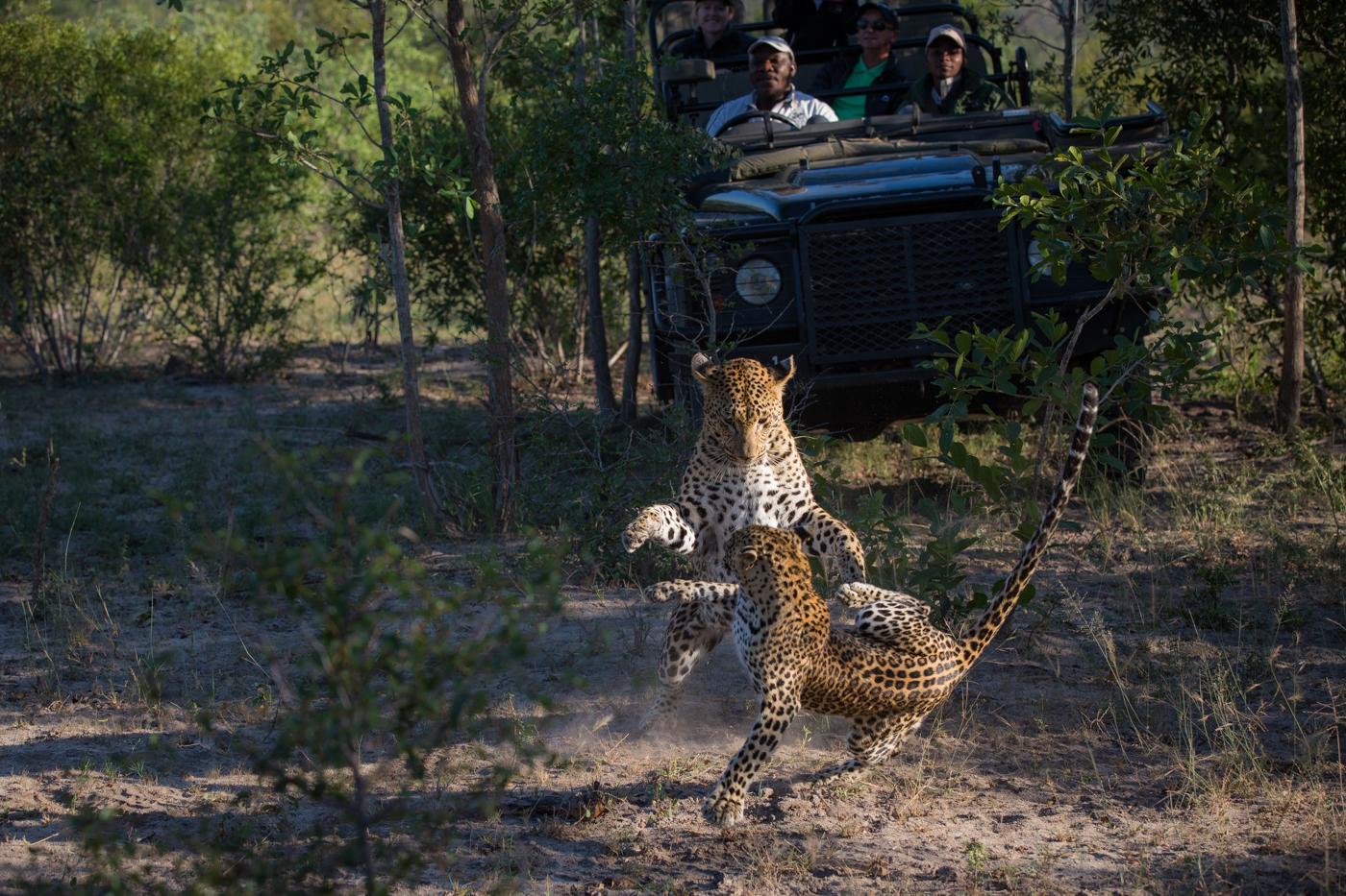 Mashaba Leap Cub Vehicle