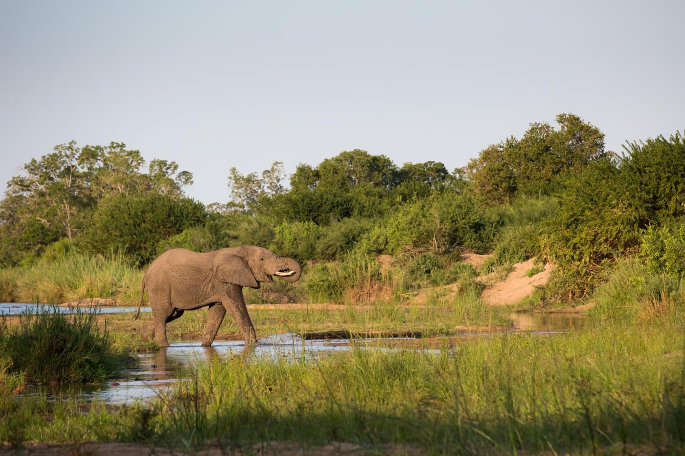 Elephant Cross RIver