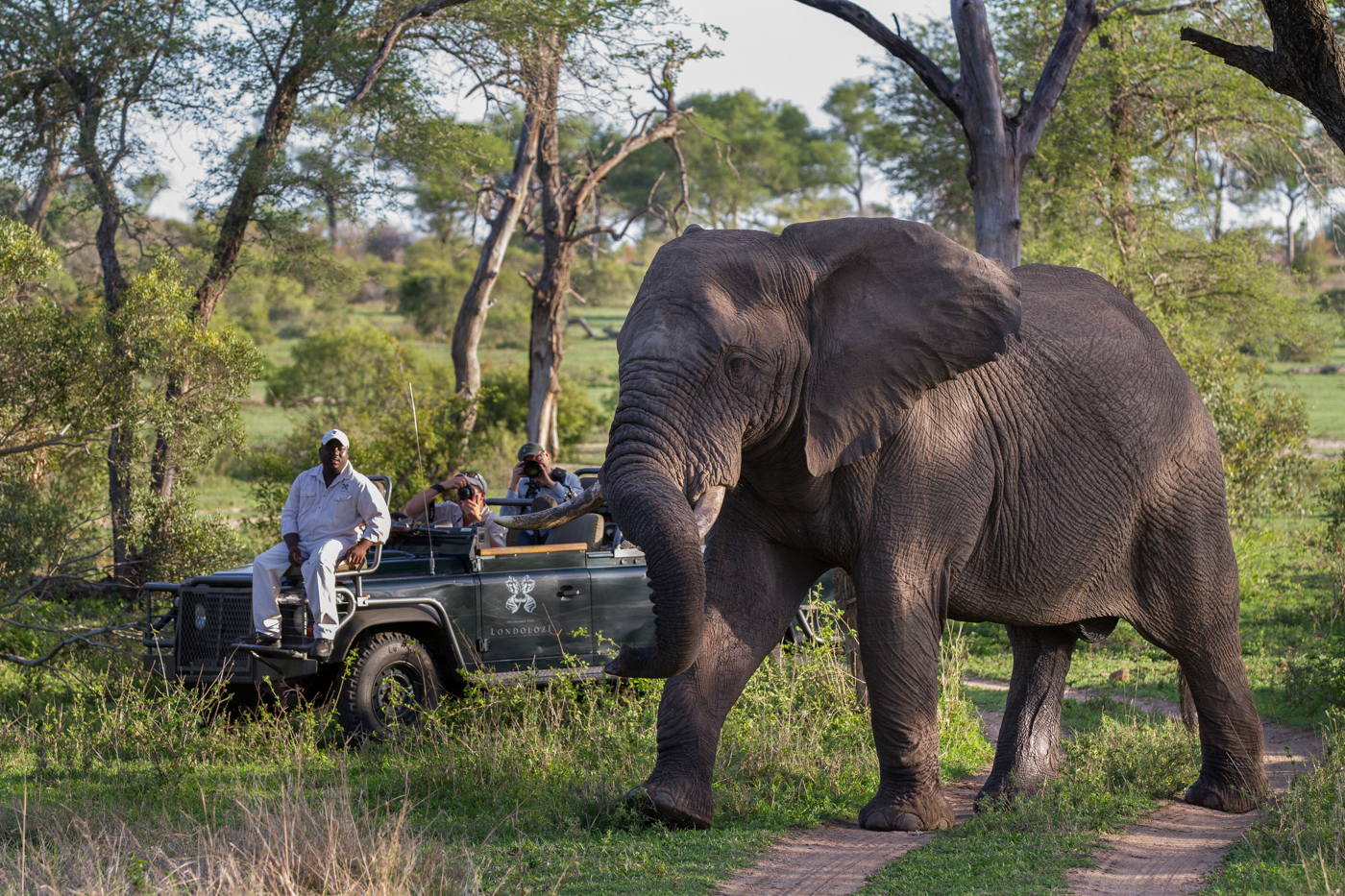 Don-Elephant