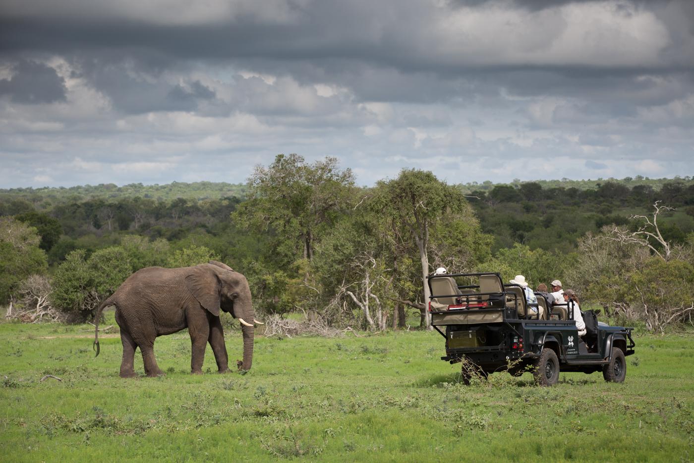 Boon_Elephants