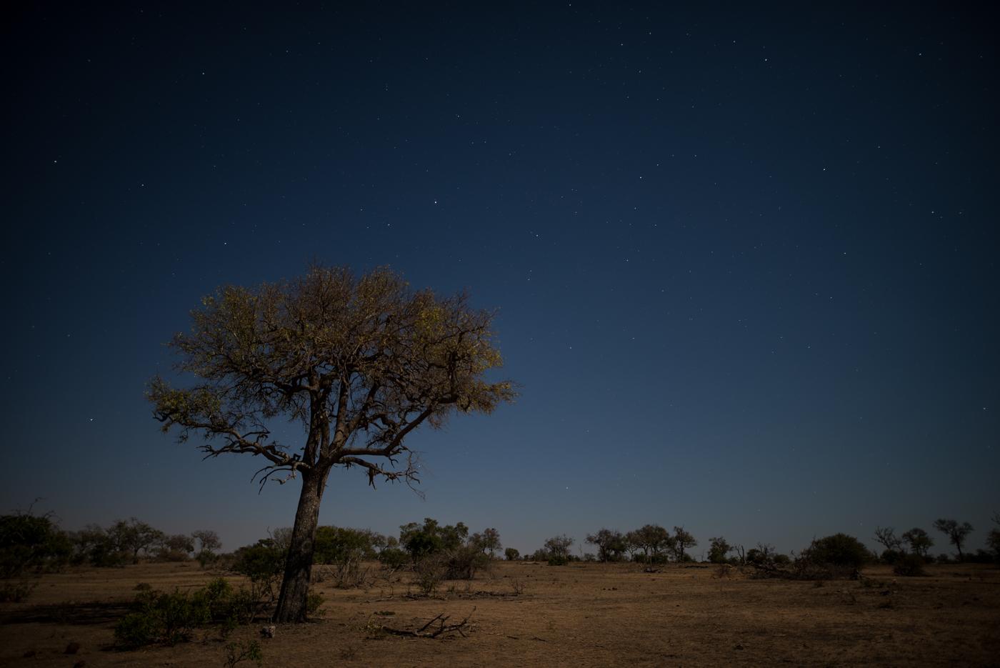 moon lit landscape, SC