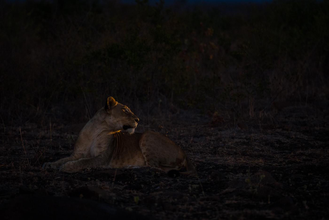 mhangeni pride, mhangeni breakaway, young lioness, SC