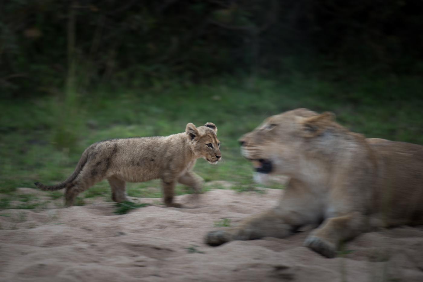 mhangeni pride, cubs, panning, SC