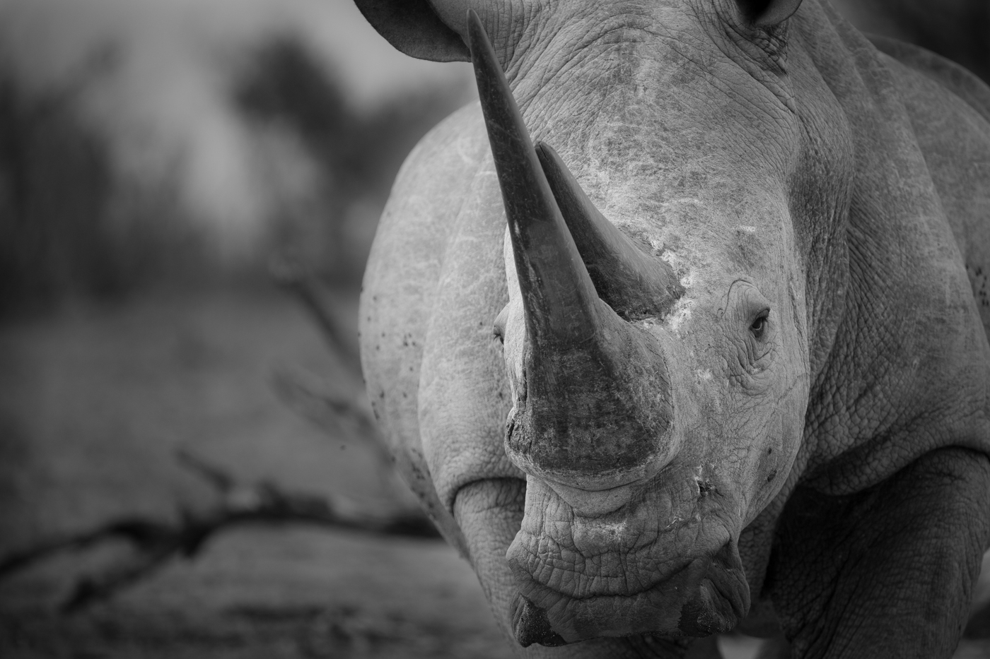 rhino-close-up