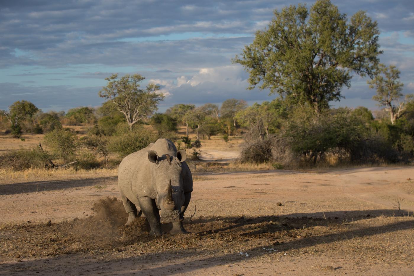 rhino-mark-territory