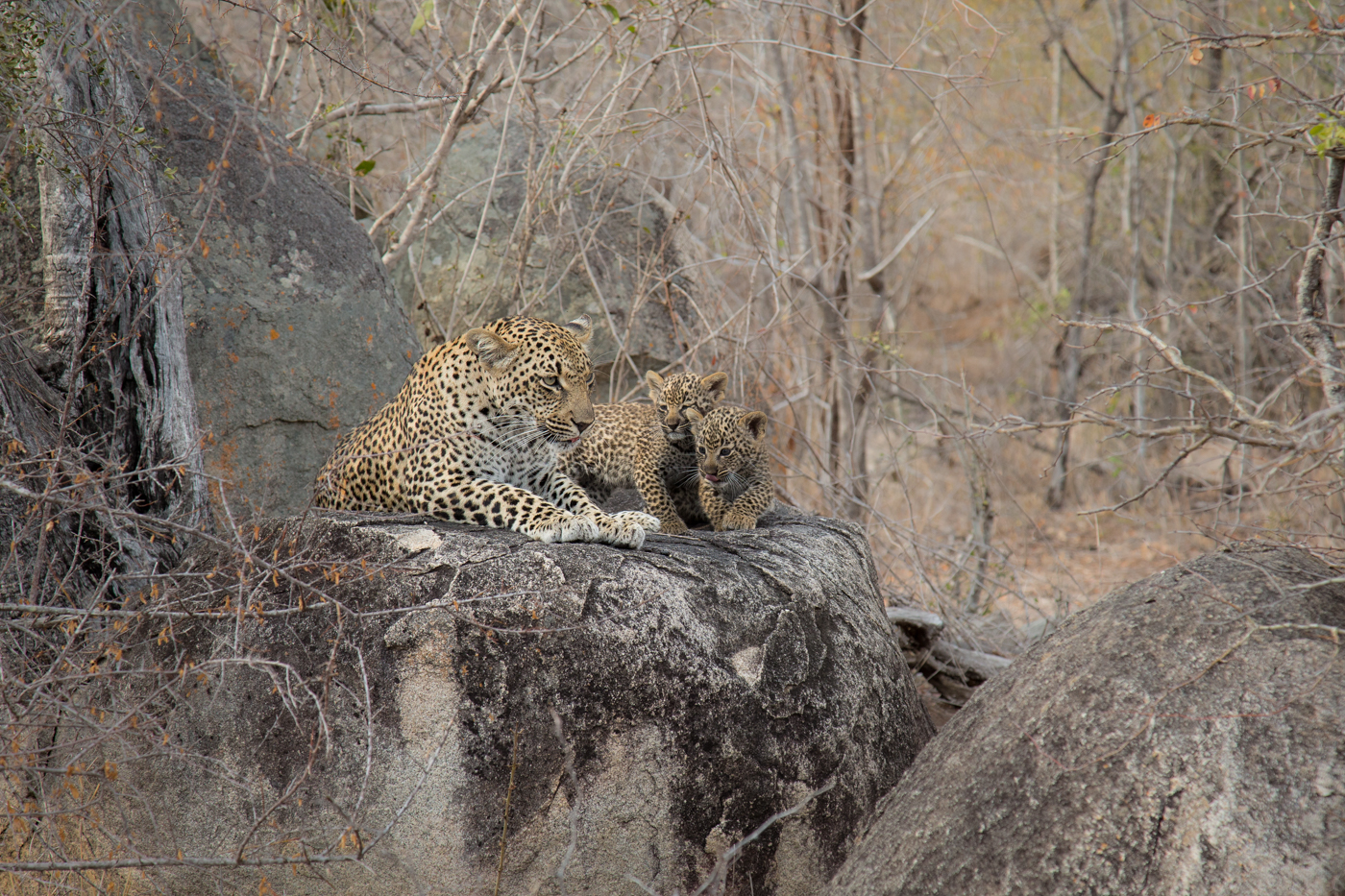 ndzanzeni-cubs