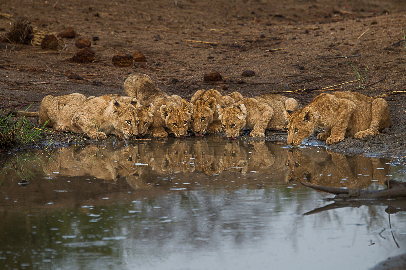 mhangeni-cubs