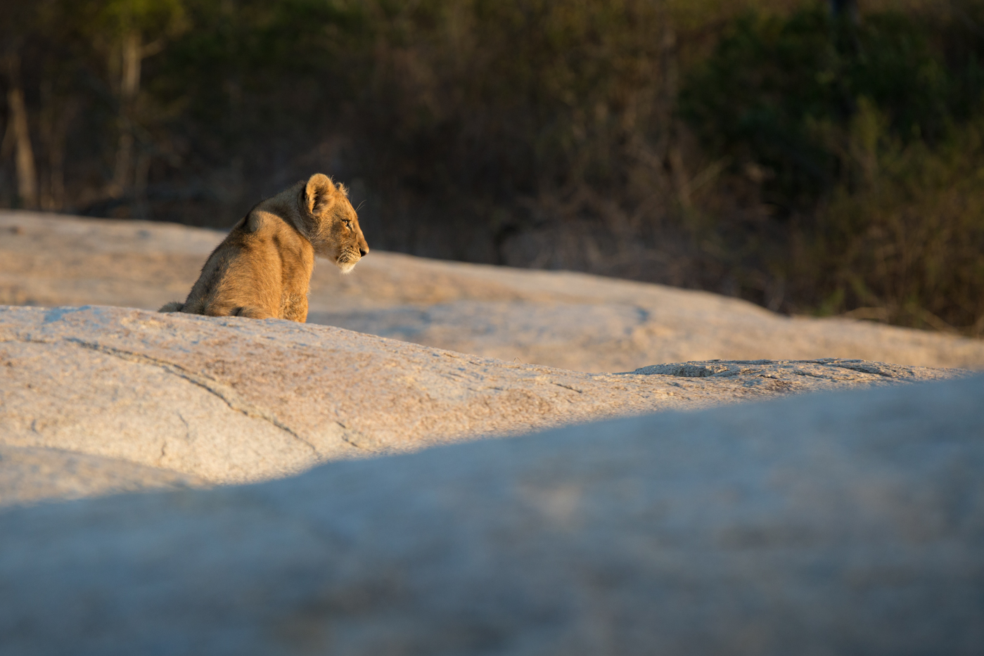 cub-on-rock
