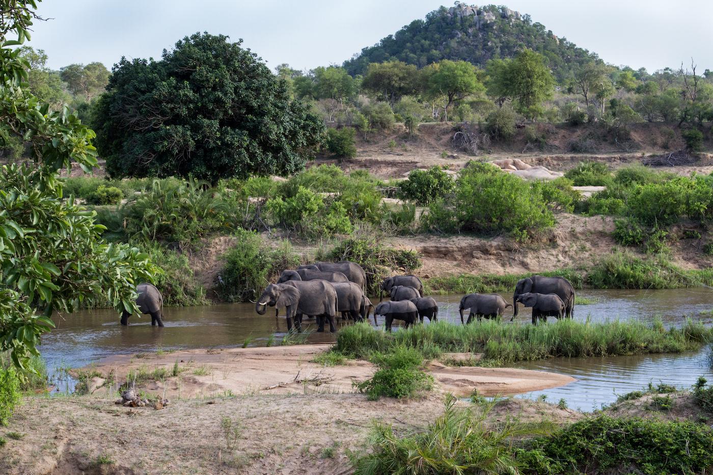 elephant-stwies-7581