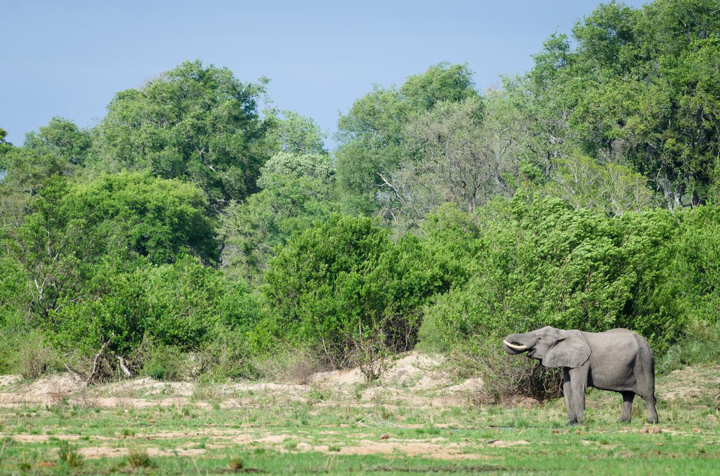 elephant-sand-river-kp