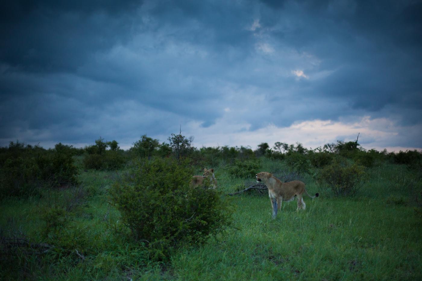 Mhangeni Storm skies JT