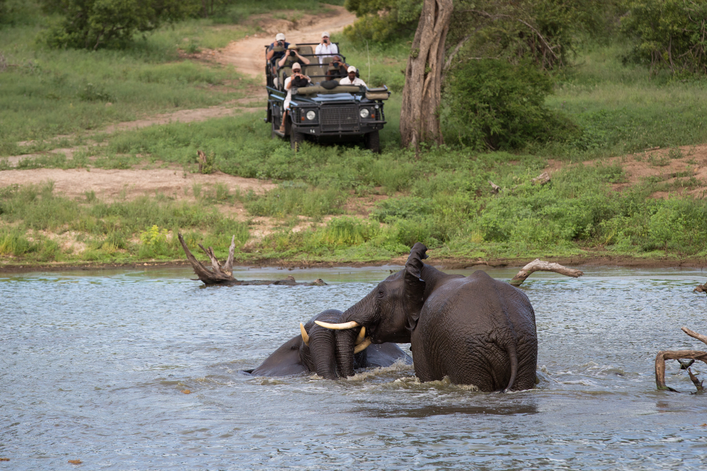 Elephant Swim vehicle JT