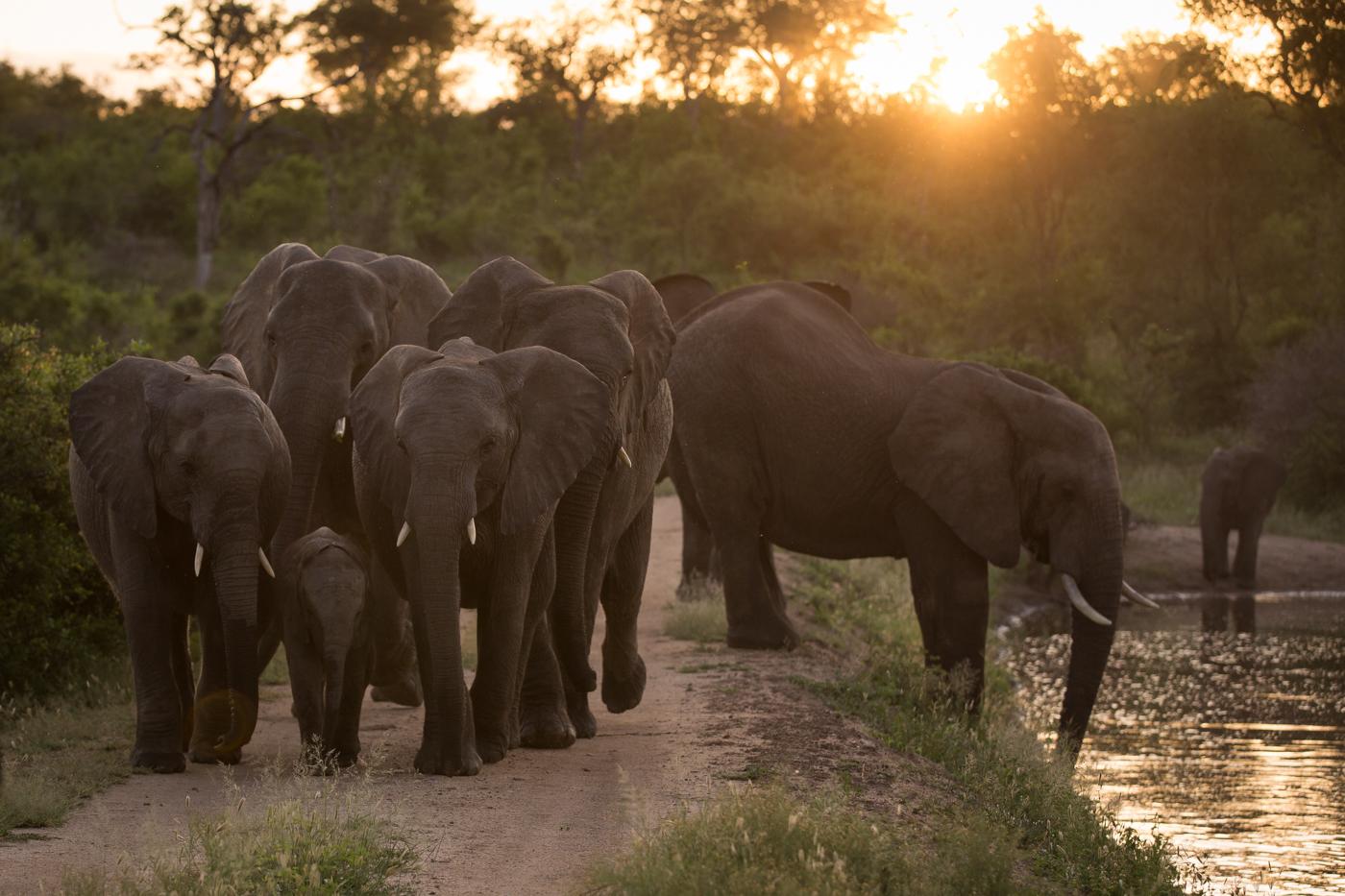 elephants, JT