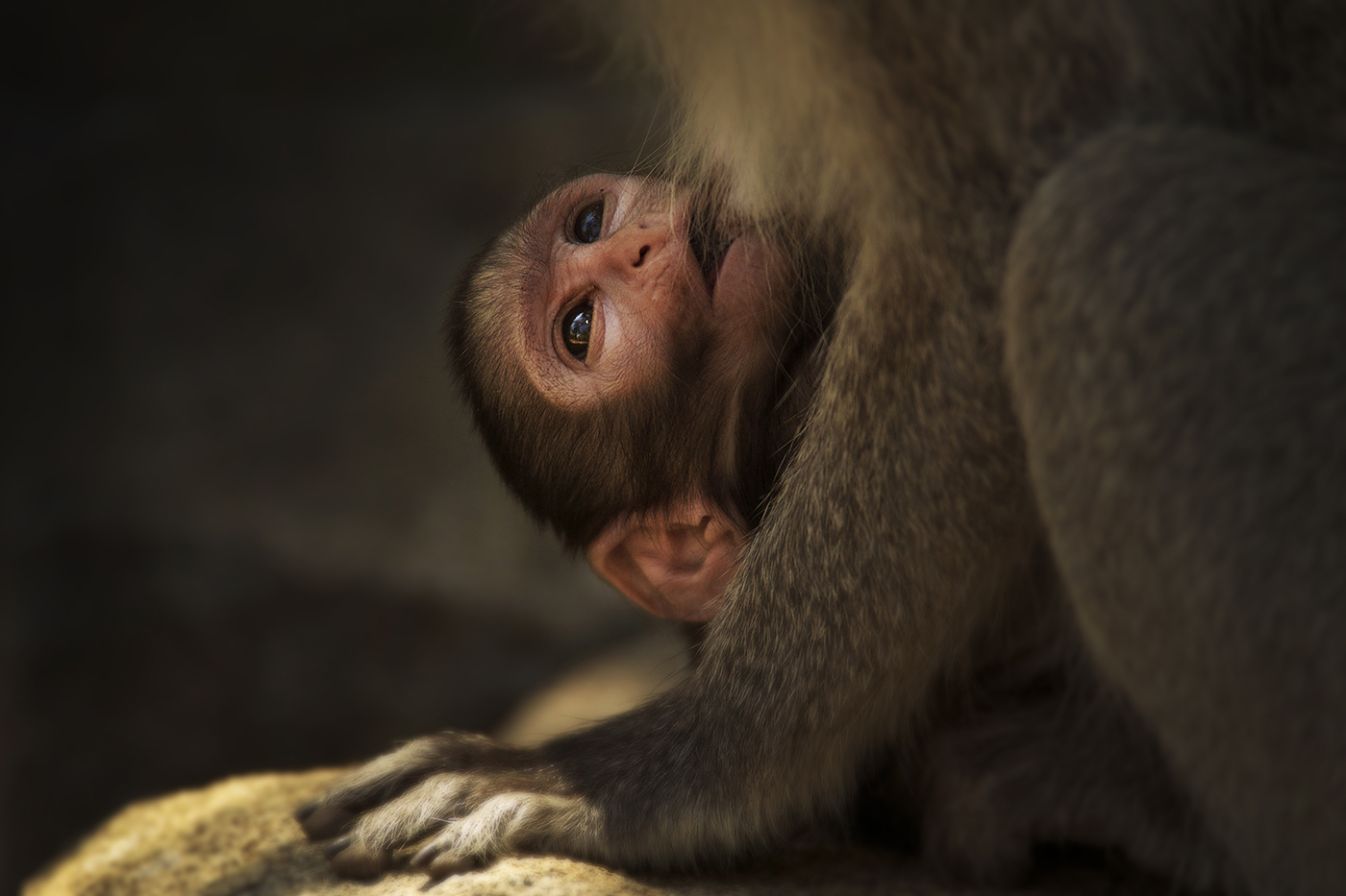 Baby Monkey Talley Smith