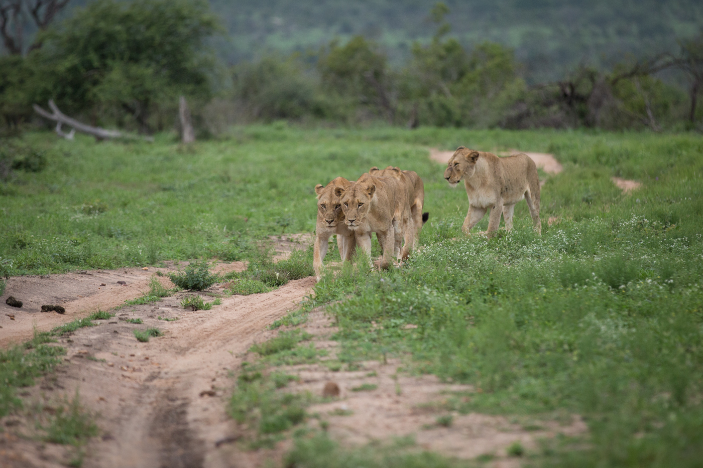 mhangeni-breakaway-jt