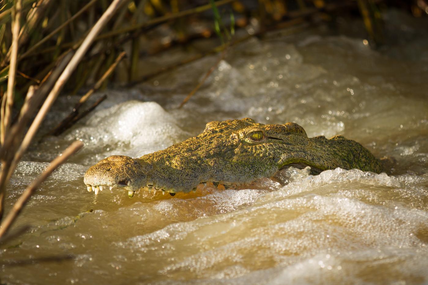 croc-causeway-jt