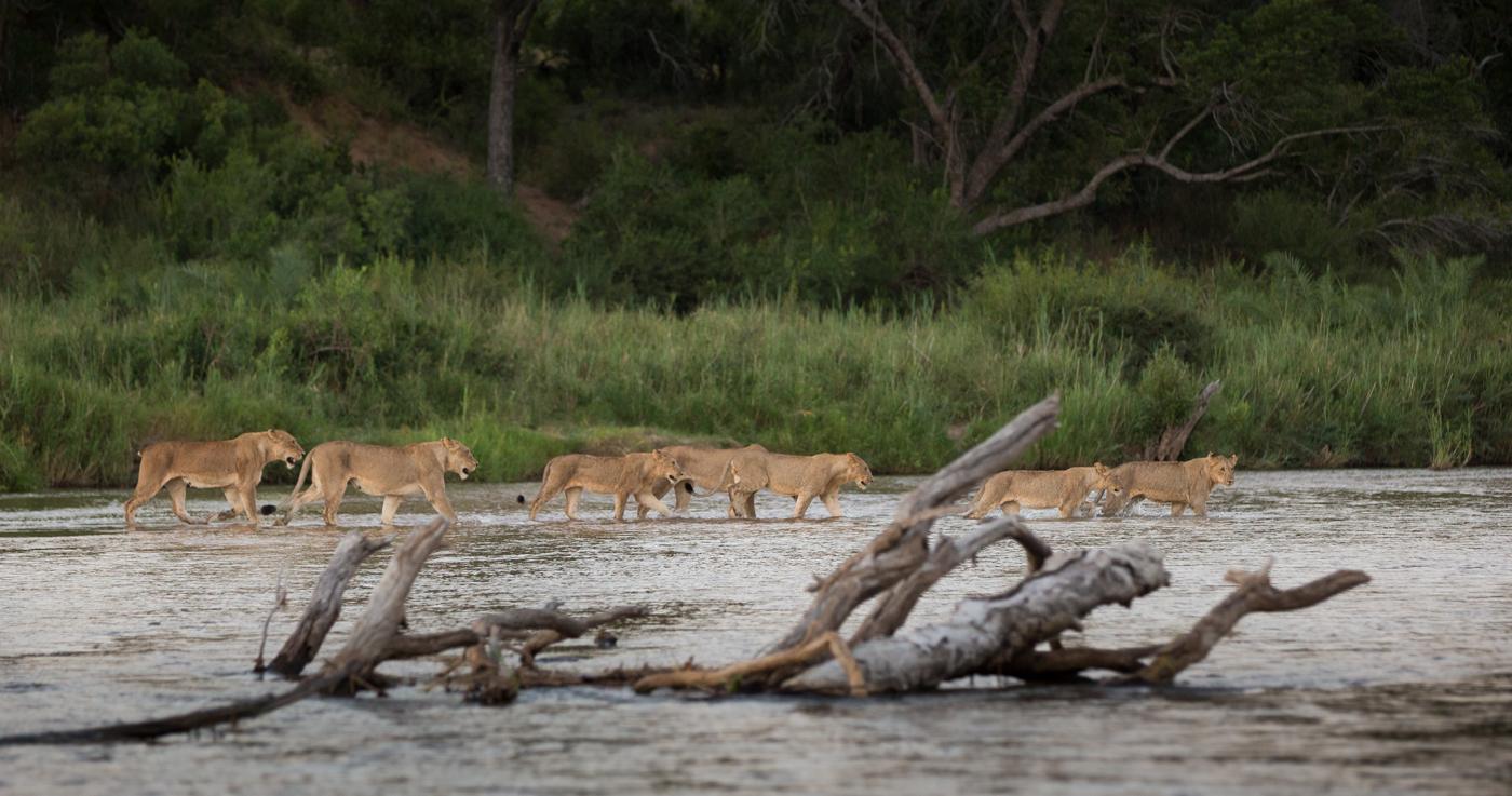[Image: Tsalala-River-Cross-JT.jpg]