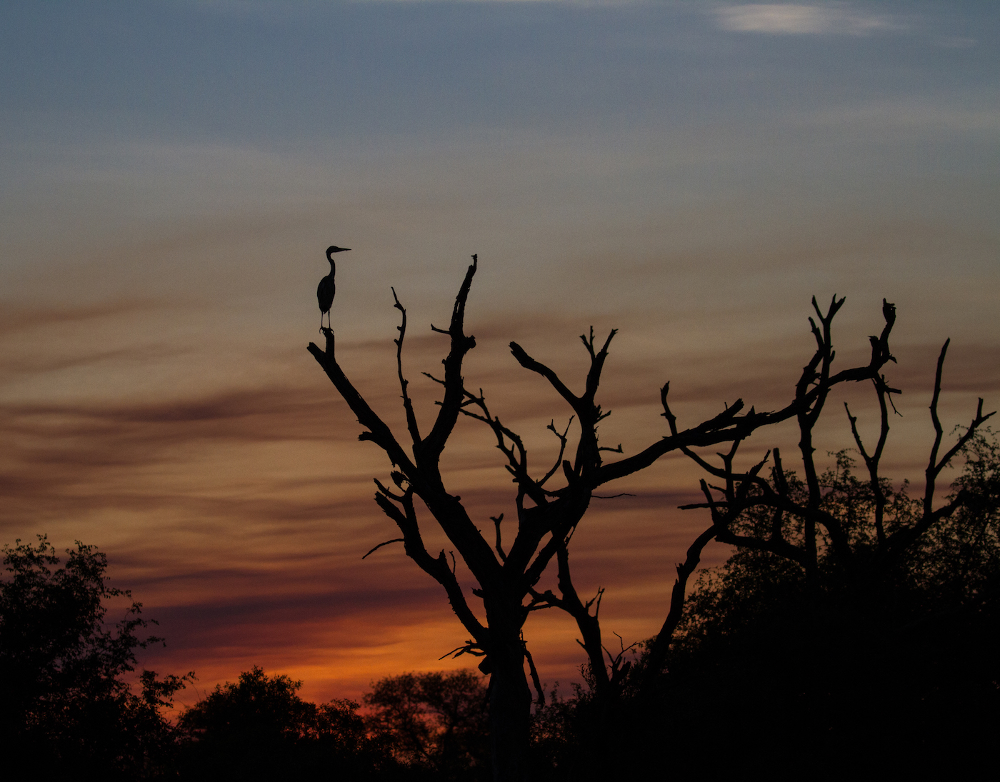 Heron sunset silh-2176