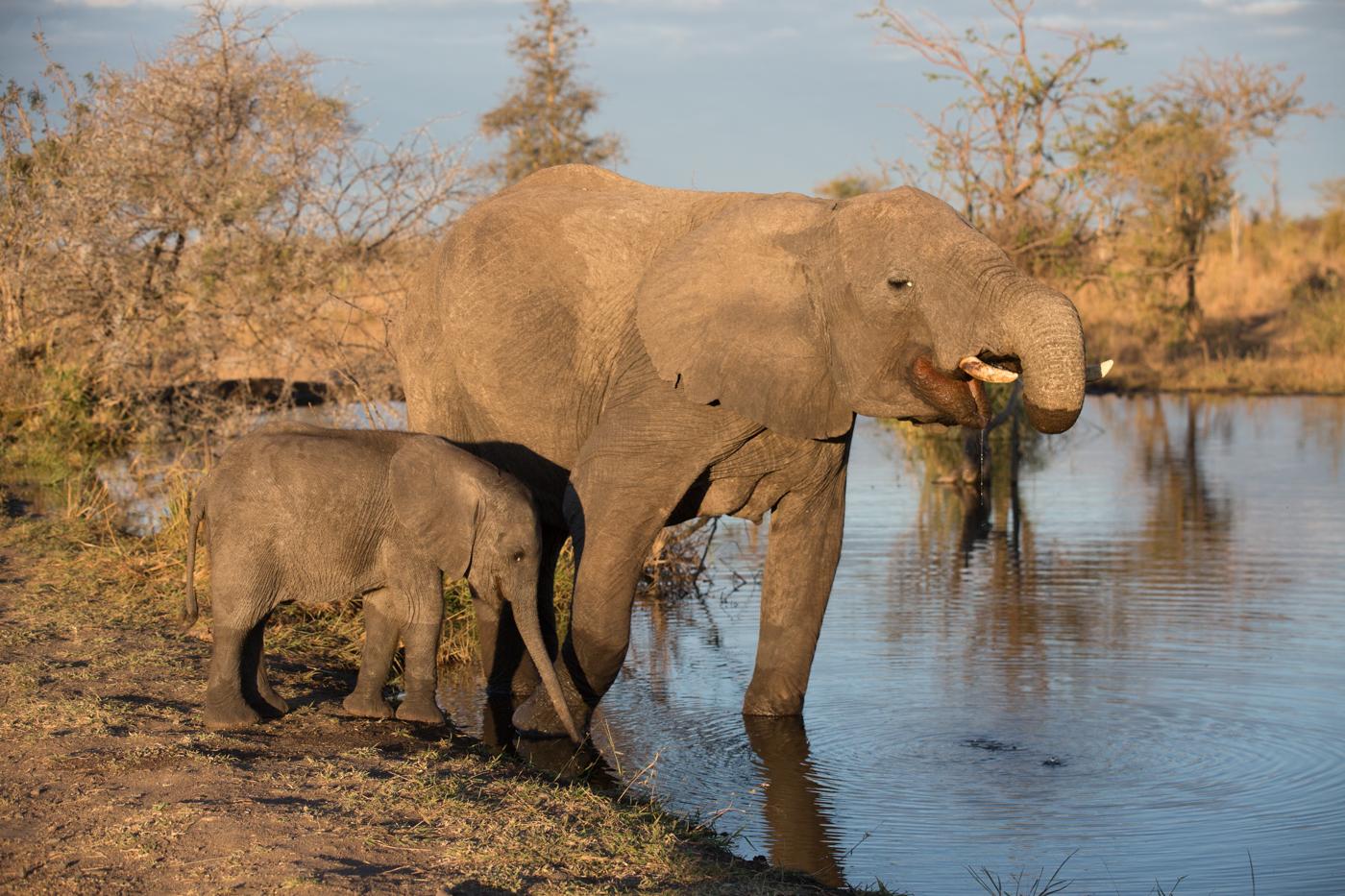 Elephant-Spray2