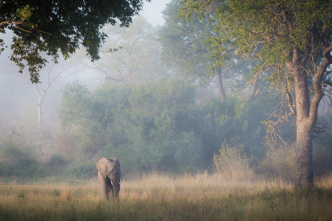 elephant, makomsava, trees, SC