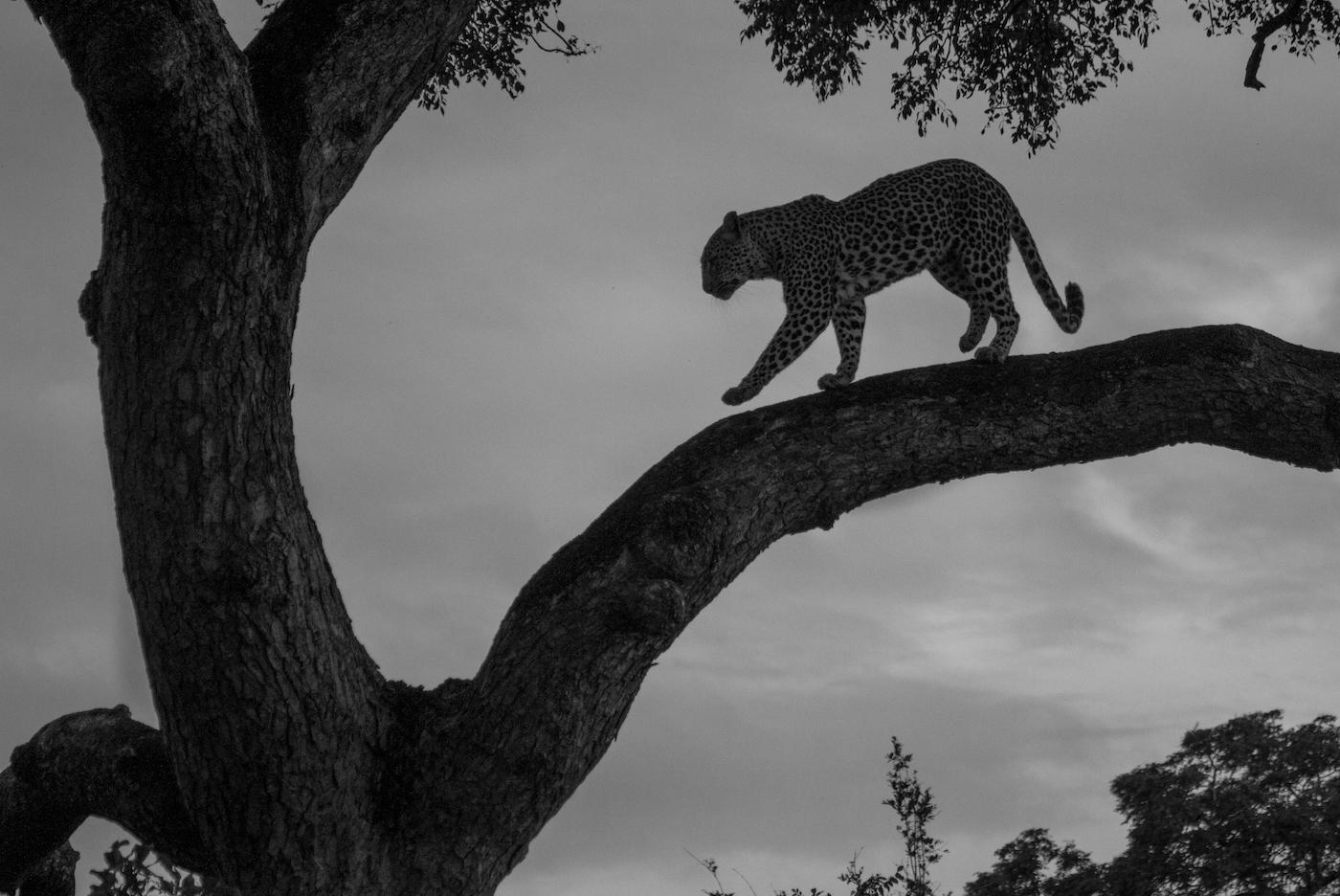 Nhlanguleni tree-8721