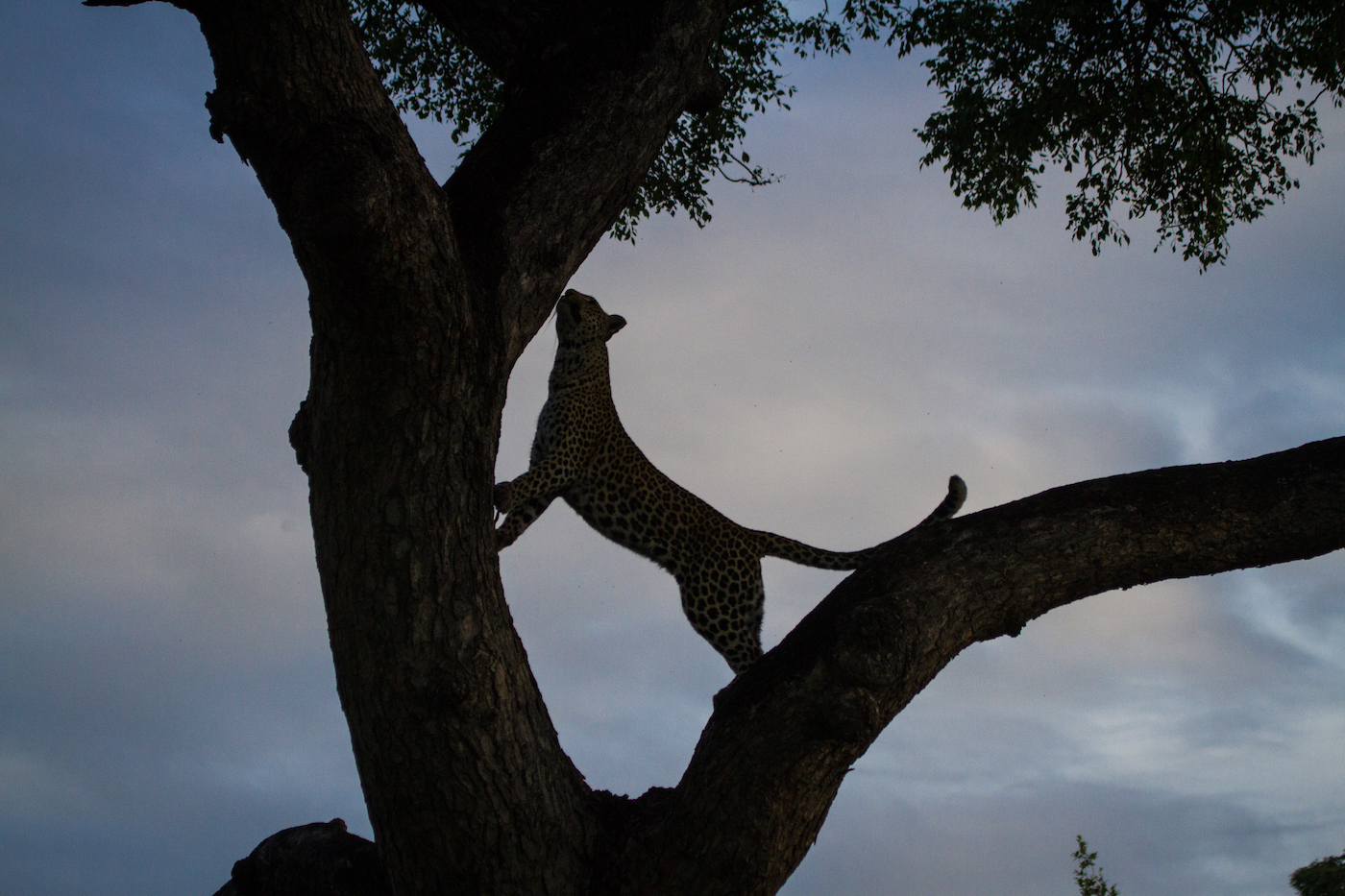 Nhlan tree Don blog1-8740