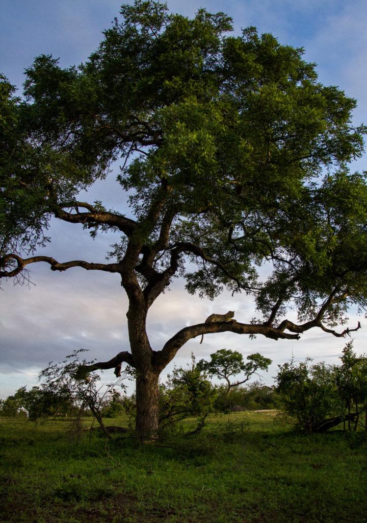 Nhlan tree Don blog-8714