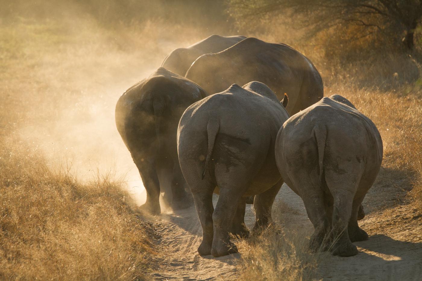 rhino crash dust