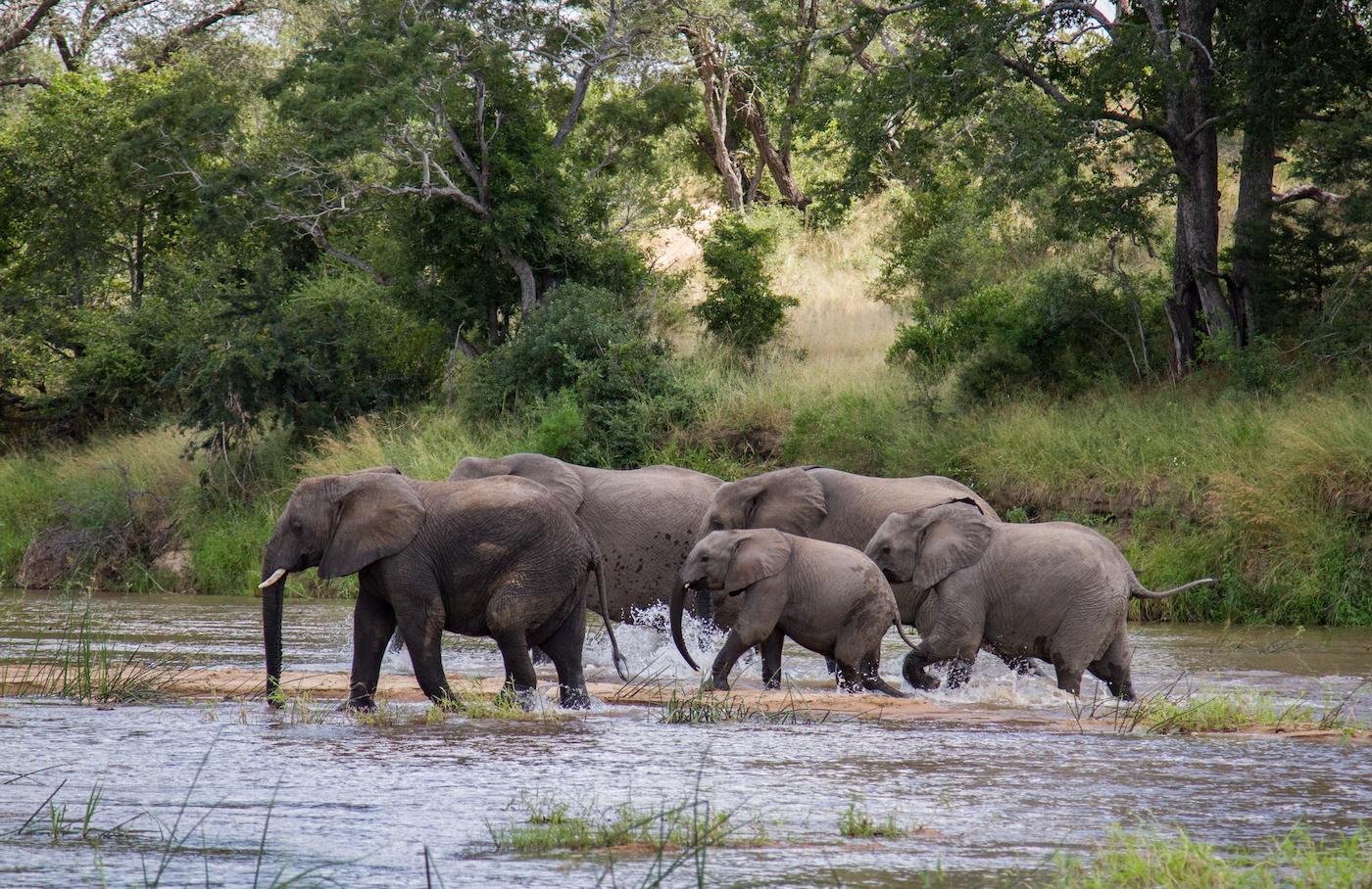 how old is that elephant londolozi blog