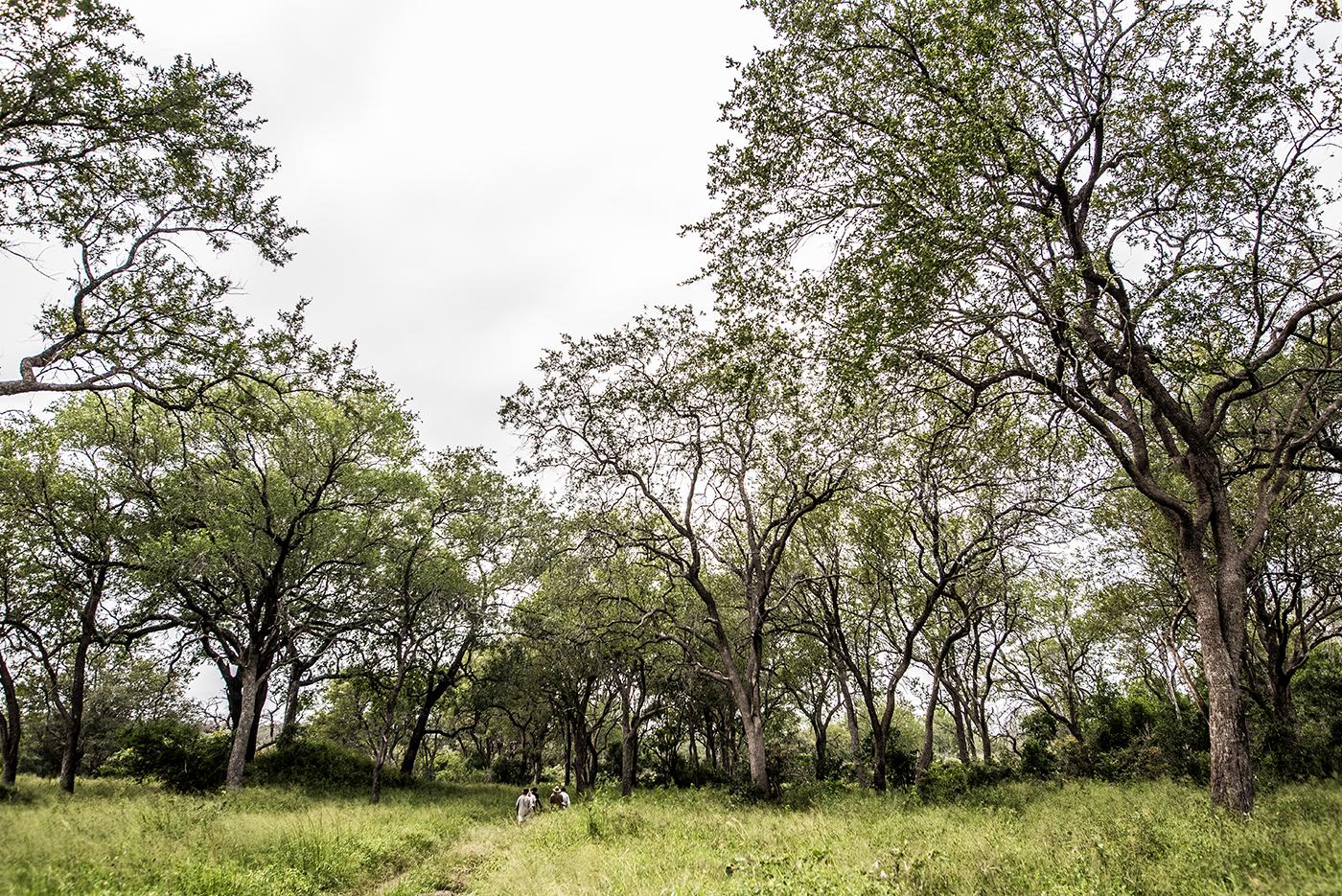 leadwood, trees, walking, AR