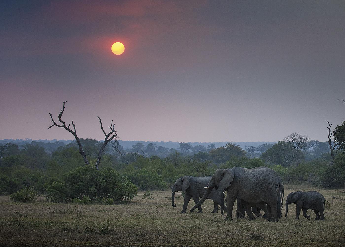 elephants, sunset, RL
