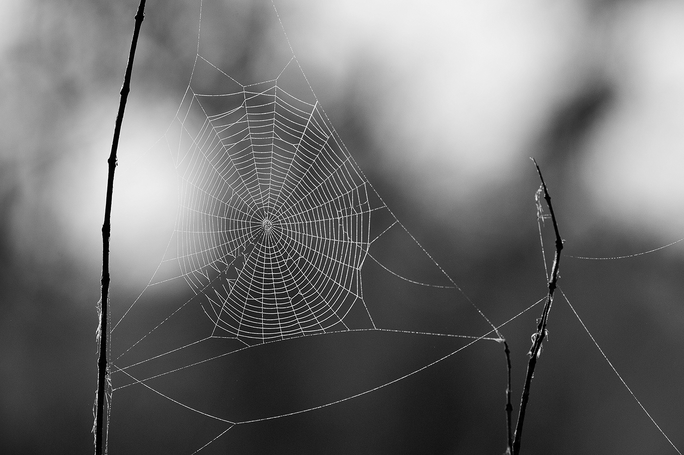 spider web, AA