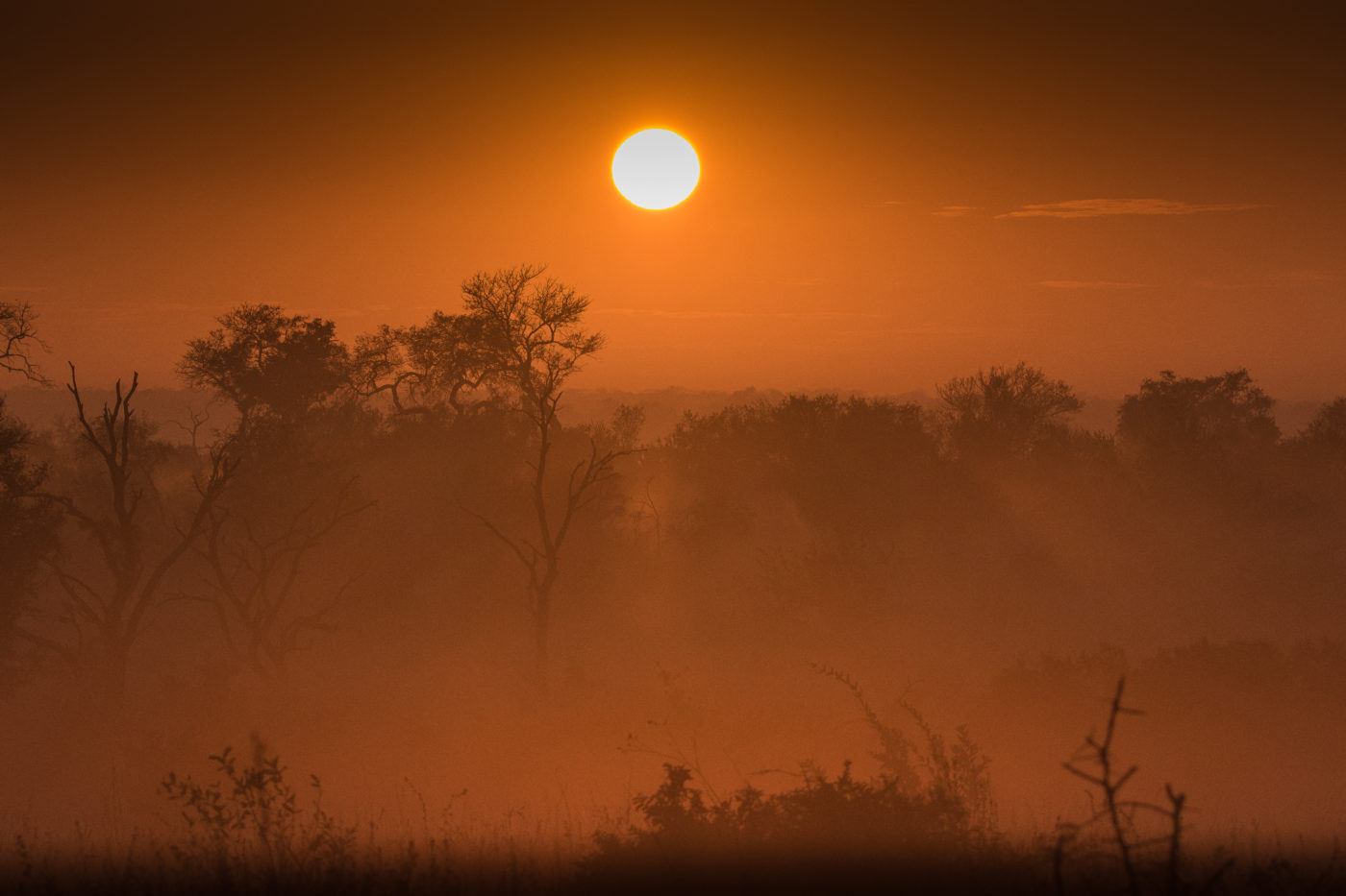 sunrise, mist, winter