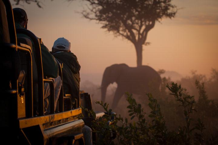 elephant, vehicle, sunrise, mist