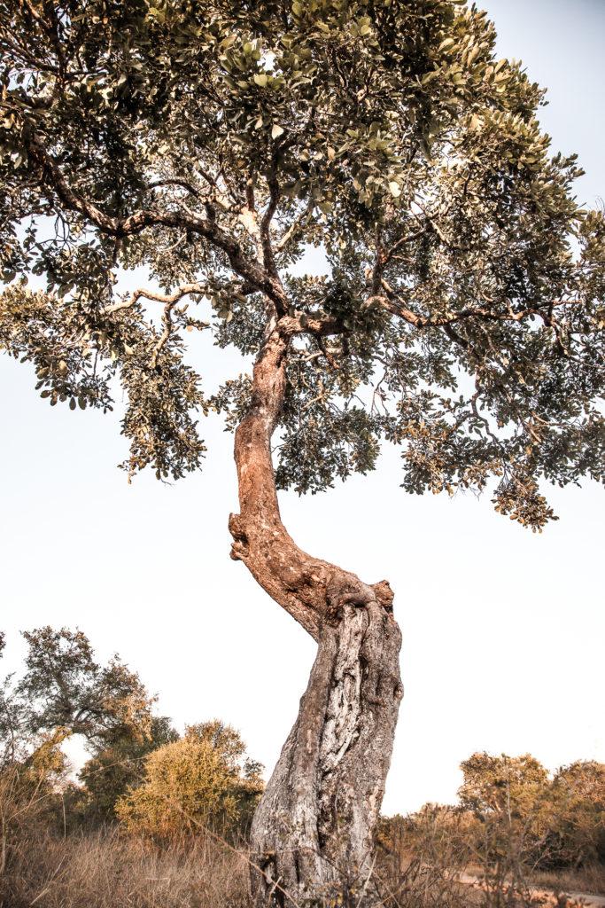 Apple leaf, tree, Amy Attenborough