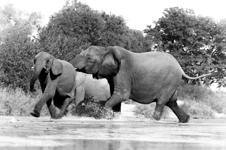 elephants, sand river, nick kleer