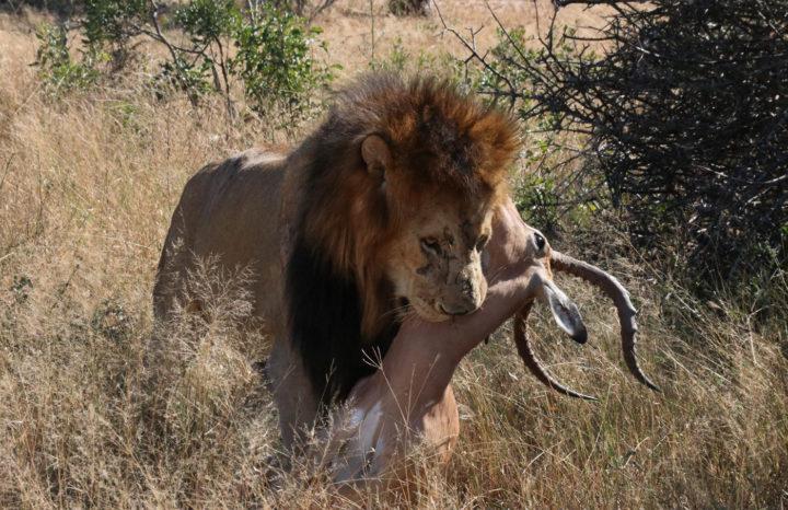 matshipiri, impala kill