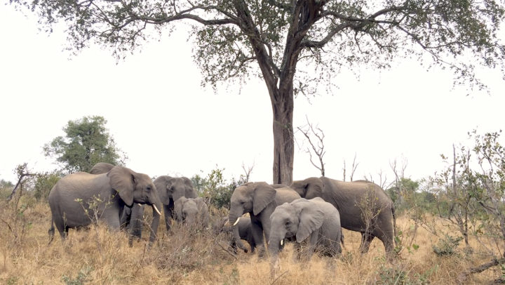 Torchwood, elephants
