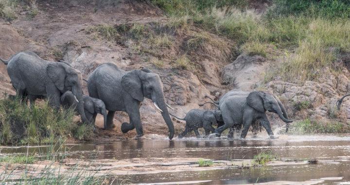 elephants, Sand River, Irene Nathanson