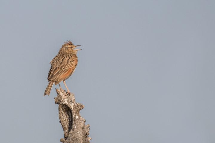 Londolozi, KNP, Fin Lawlor, bird