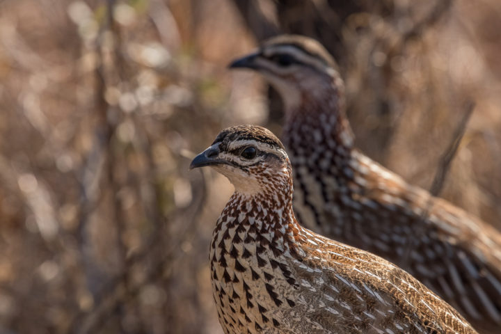 Londolozi, KNP, Fin Lawlor, birds