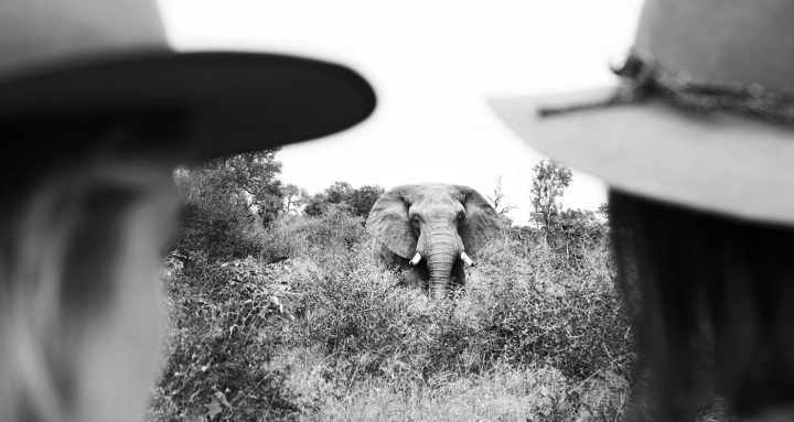 Londolozi Game Reserve Elephant Tracking