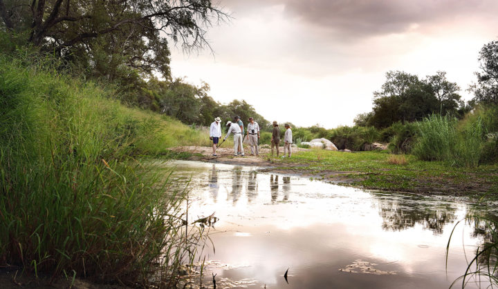 Londolozi Game Reserve, Kruger National Park, Manyaleti, walking, Elsa Young