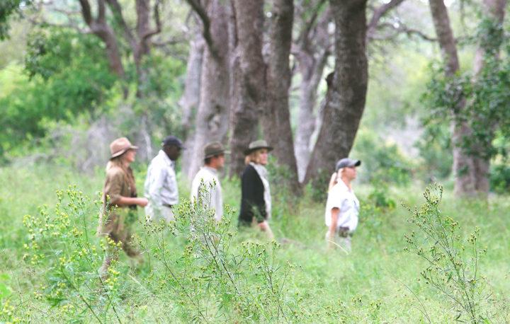 Londolozi Game Reserve, Kruger National Park, trees walking, Elsa Young