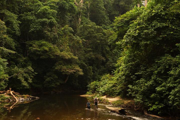 gabon, forest