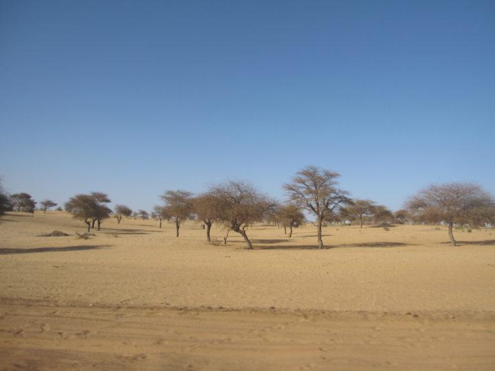 Gourma, Mali, desert elephants