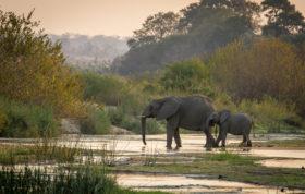 Londolozi Game Reserve, Elephants