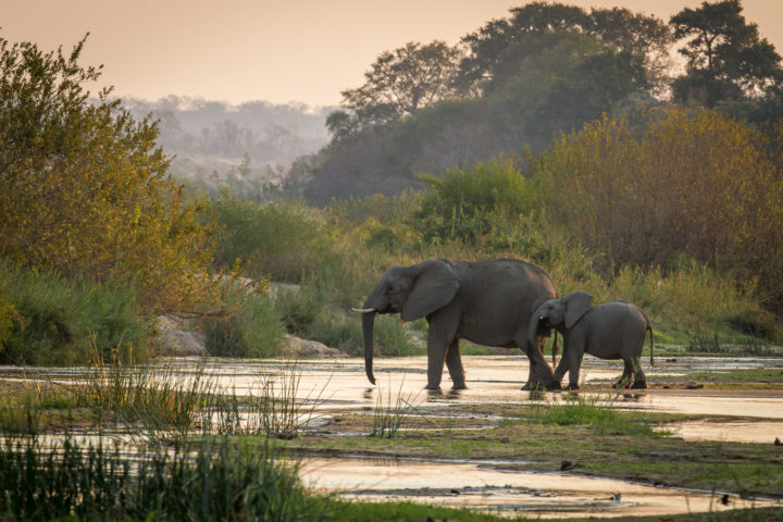 Londolozi Game Reserve, Elephants