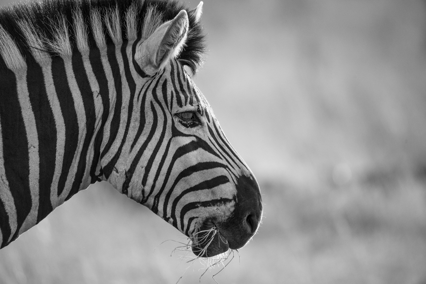 the week in pictures 302 londolozi blog