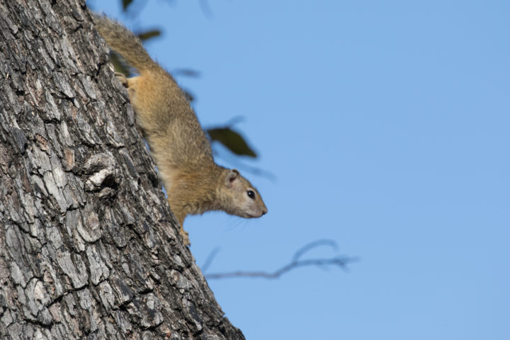 Squirrel, tree, sky